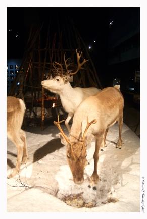 Lapland - Arktikum