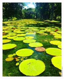 Lac de nénuphars